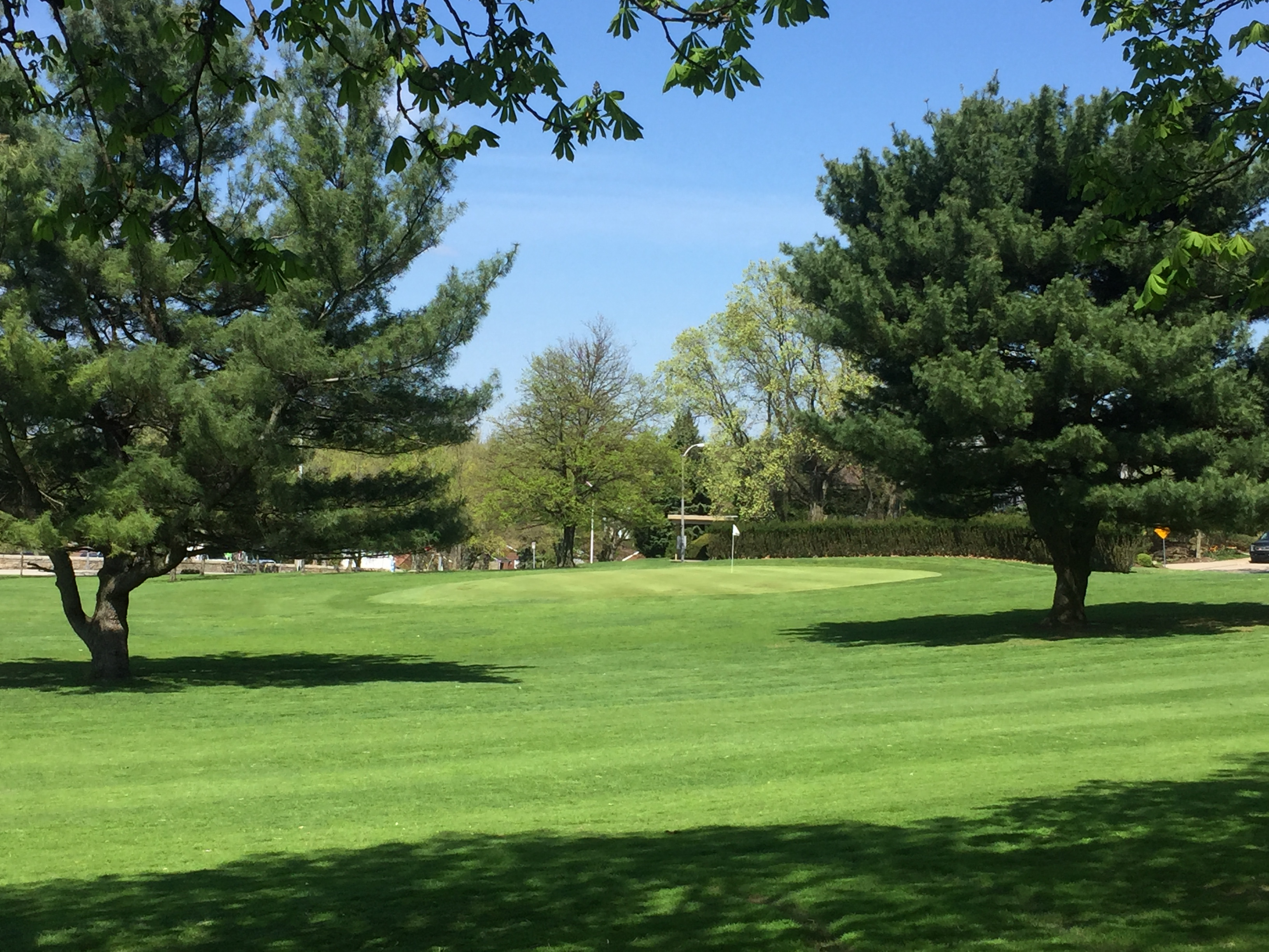 Hole 2 Green   Pine Trees Spring