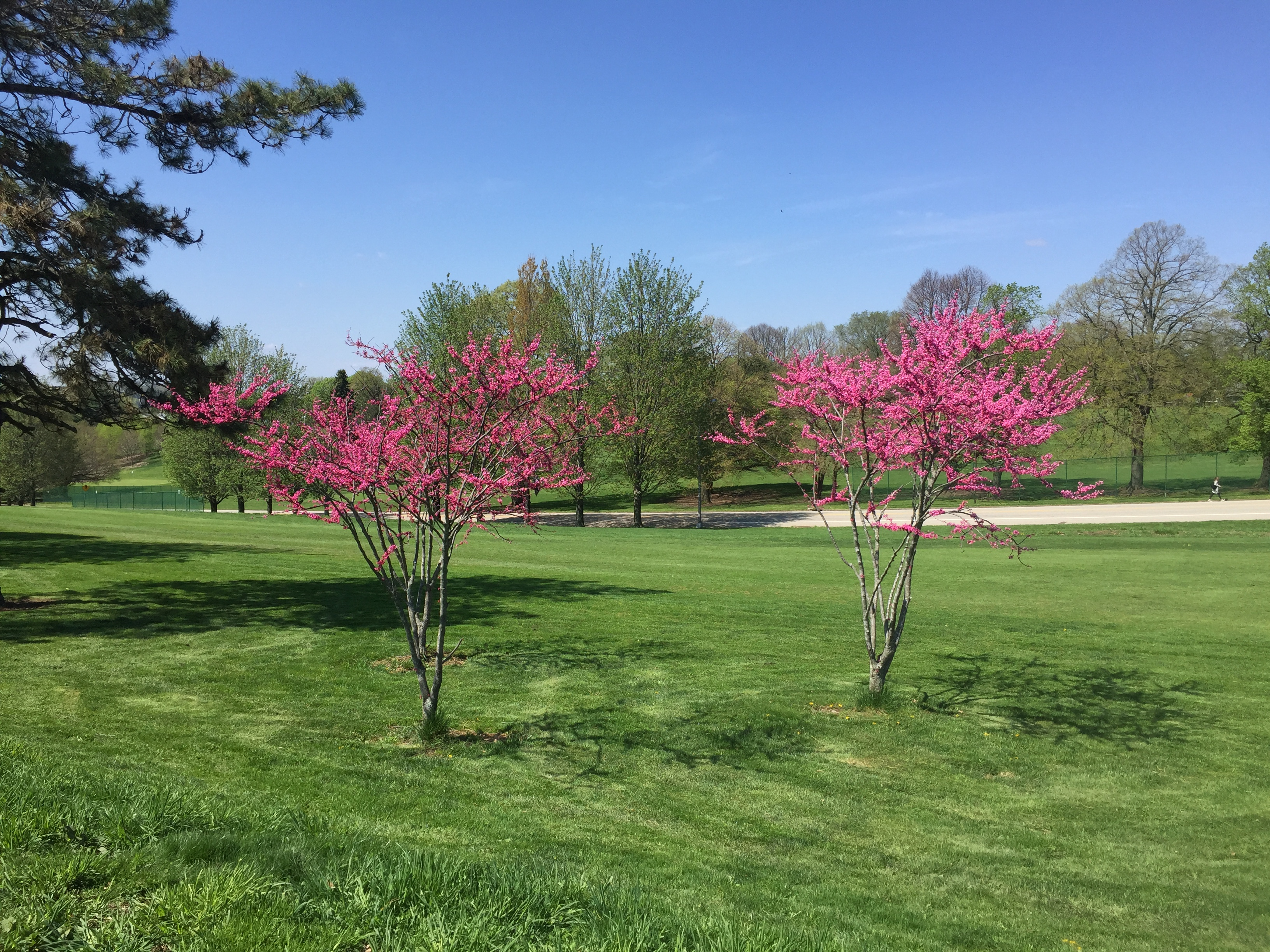 Hole 3 Flowering Trees Spring