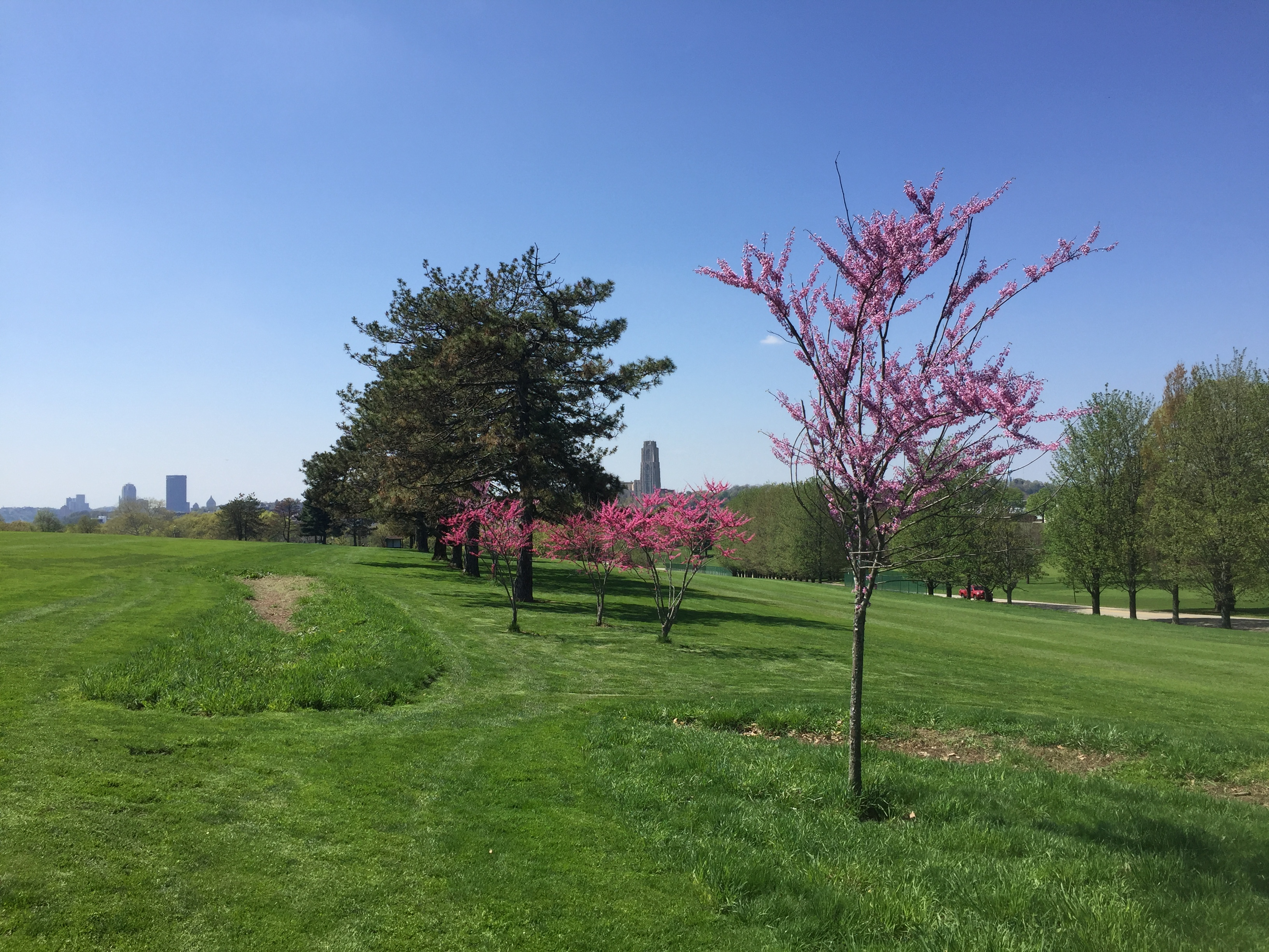Hole 4 Flowering Trees   Skyline Spring